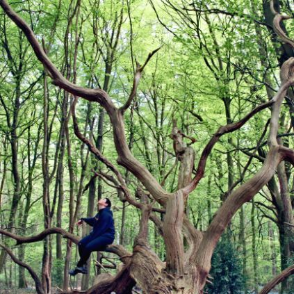 Brockwood Park School - Nature - A student sitting on a large tree