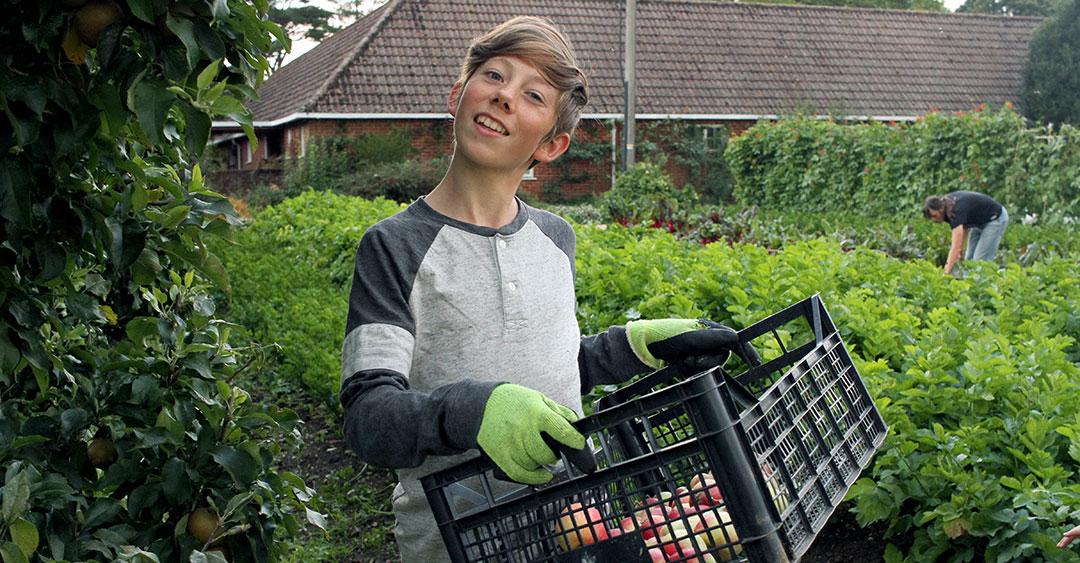 Brockwood Park School student harvesting apples in the garden